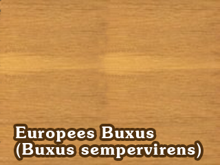 Europees Buxus